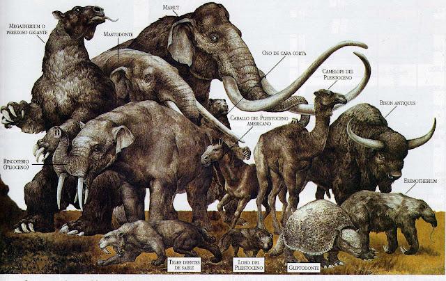 megafauna americana extinta
