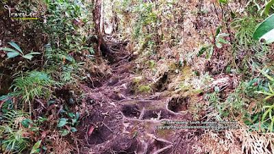 jalur pendakian gunung latimojong