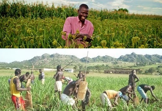 farming business in Nigeria