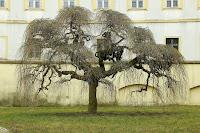 Strom/The Tree