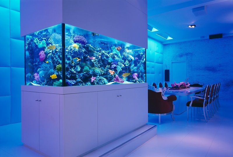 Gambar-Gambar Aquarium Mewah