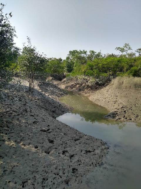 sunderbans, mangroves, water, saline
