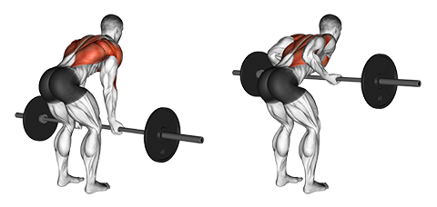 back and biceps workout, underhand barbell row