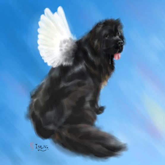 Inkling the Newfoundland dog is in heaven, probably.