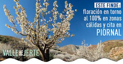 Comienza el punto álgido de la floración en el Valle del Jerte