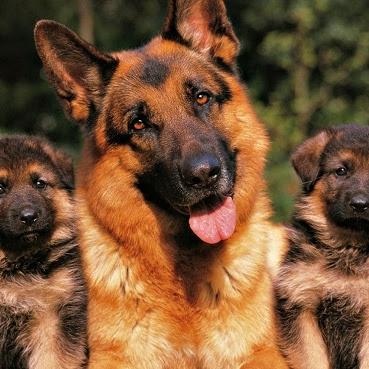 Friends for Life - Vamos adotar um cão?