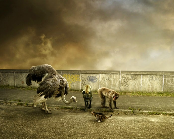Фотомонтажи Mattijn Franssen