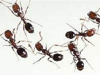 5 Tips Jitu Usir Serbuan Semut dari Rumah Minimalis Anda
