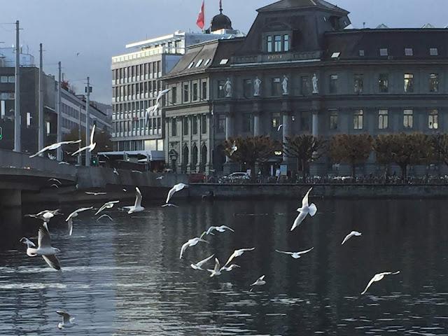 Möwen kreisen über der Reuss in Luzern