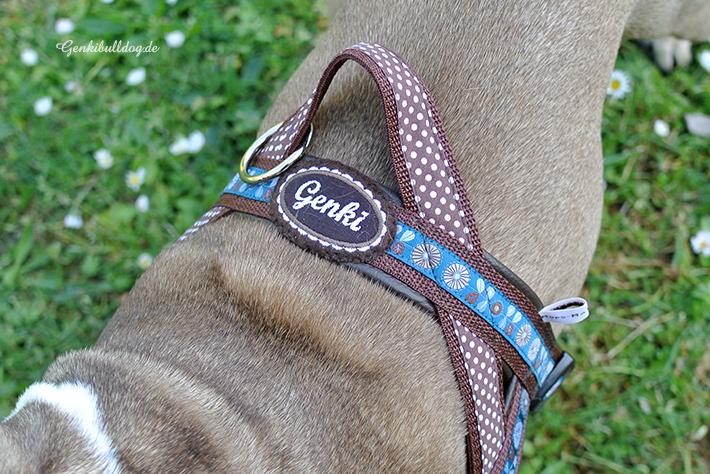 HUNDEBLOG GENKI BULLDOG : Mein neuer NorwegerHundeblog Genki Bulldog ...