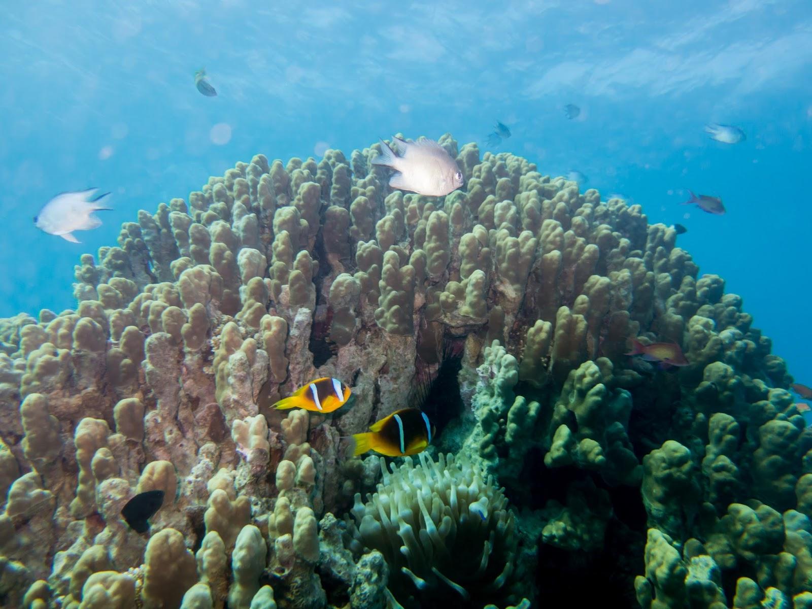 Submerging in jordan s giant aquarium maho on earth for Aqaba dive