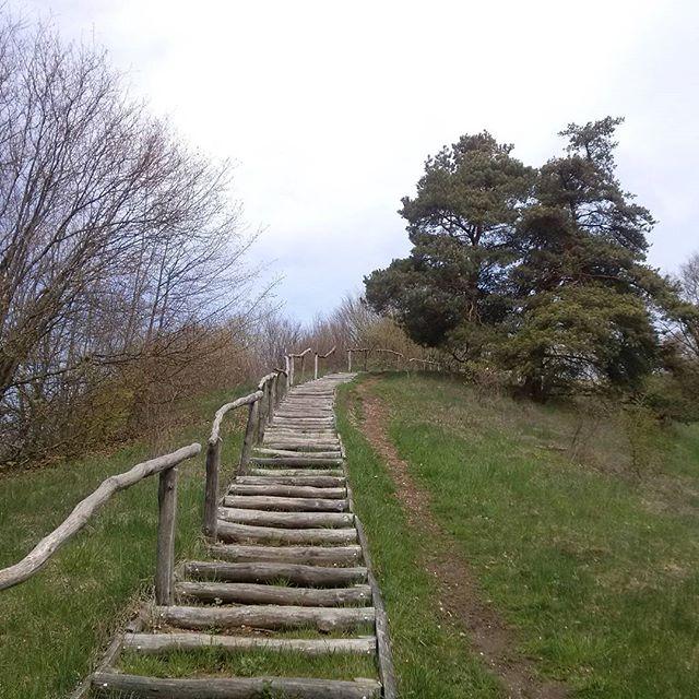 droga na Górę Zamkową