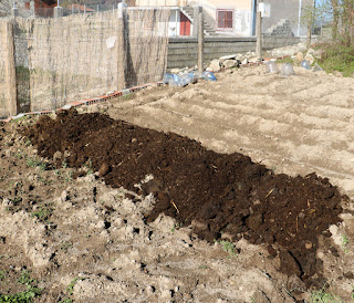 Cow manure ready for spreading