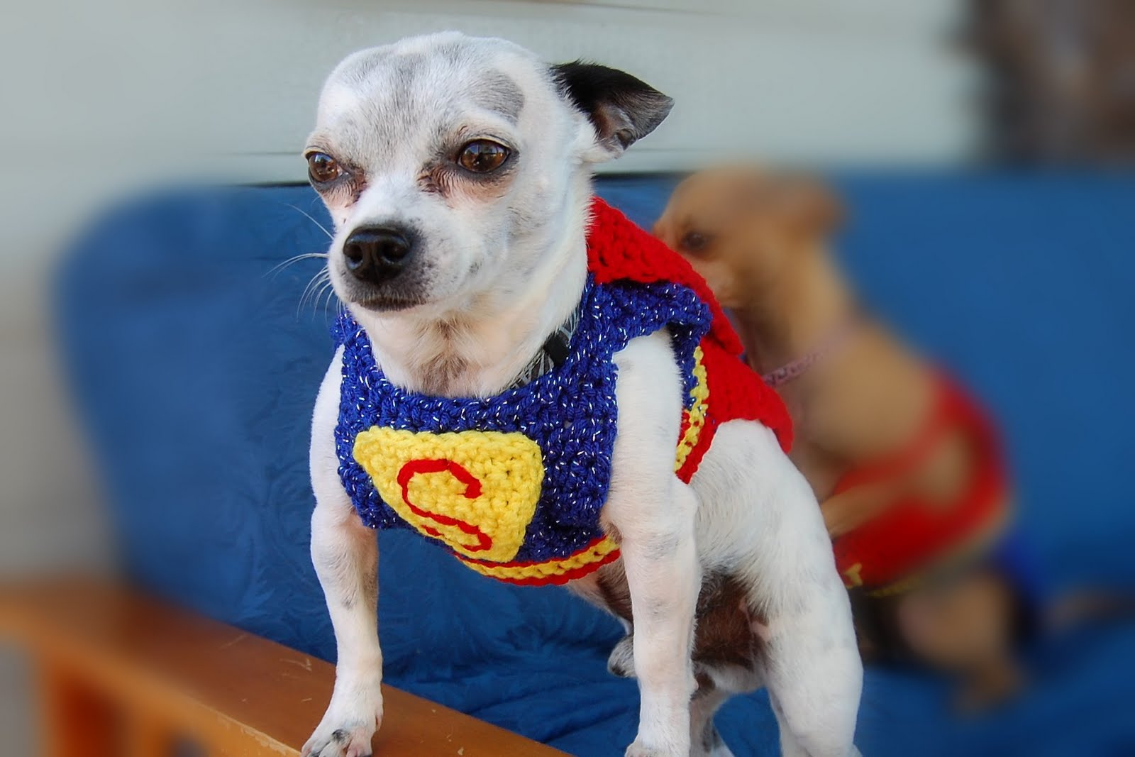 Posh Pooch Designs Dog Clothes Quot Here We Come To Save The Day Quot