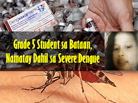 "After the expose of the controversy on the questionable effect of Dengvaxia, victims started to surface attesting to the adverse effect of the vaccine and some children has actually died. In October last year, a Grade 5 student in Mariveles, Bataan, died of severe dengue, months after receiving a shot of Dengvaxia.  Read: More than 700 Filipino children at risk after receiving anti-dengue vaccine.  Christine Mae de Guzman, who had no previous history of dengue, developed severe headache and fever on October 11, was rushed to the Bataan General Hospital on October 14, and died on October 15. She received the first Dengvaxia shot in April.  The Sisiman Elementary School student's death certificate stated that she died due to disseminated intravascular coagulopathy and severe dengue.  De Guzman's parents, Marivic and Nelson, who believe her condition was caused by the vaccine, are hoping for justice, especially after Sanofi Pasteur, Dengvaxia's manufacturer, admitted that the vaccine may aggravate the disease in people who have not been afflicted previously by dengue.  ""Sana po magkaroon ng hustisya sa pagkamatay ng anak ko,"" Marivic said. ""'Di naman po kasi masakitin 'yung anak ko. First time po niyang magkasakit ng ganun tapos dire-diretso po.""  The report said Marivic and Nelson signed a parental consent form before their daughter was given the anti-dengue vaccination.  The Volunteers Against Crime and Corruption (VACC) will present De Guzman's death in the class action lawsuit it hopes to file against those involved on the controversial P3.5-billion dengue vaccination program of the Department of Health (DOH).  Prior to De Guzman's case, the death of an 11-year-old student who supposedly died after receiving the anti-dengue vaccine was brought up in a Senate blue ribbon committee investigation on the program in 2016.  Meanwhile, student Amy Tamayo from Tarlac reportedly contracted dengue despite receiving her third dose of Dengvaxia last August.{INSERT 2-3 PARAGRAPHS OR 3 IMAGES HERE} Sponsored Links {INSERT 2-3 PARAGRAPHS HERE}    ""Sa DOH naman po, sana naman po sa nangyari sa apo ko, naging leksyon na dapat po hindi basta-basta gumagawa ng mga ganito siguro,"" Amalia, Amy's grandmother, said.  The consent form shown by Amalia Tamayo only informed the parent of the free vaccination and none of the possible side effects of the dengue vaccine.  Health Secretary Francisco Duque III said this case puts to question the efficacy of Dengvaxia, which promised to give protection against dengue in the first 30 months.  ""Well, lumalabas na hindi 30 months. Wala namang testing ginawa. Bago ito binigay, wala namang ginawang test to look for antibodies na magpapatunay na nagkaroon ng infection. Wala namang ganun, or failure ng vaccine itself na hindi nakapagbigay ng protection,"" he said.  The DOH, which suspended the vaccination program, has started monitoring all students in Bataan and other regions who were given Dengvaxia. Source: GMA News    Advertisement Read More:          ©2017 THOUGHTSKOTO"