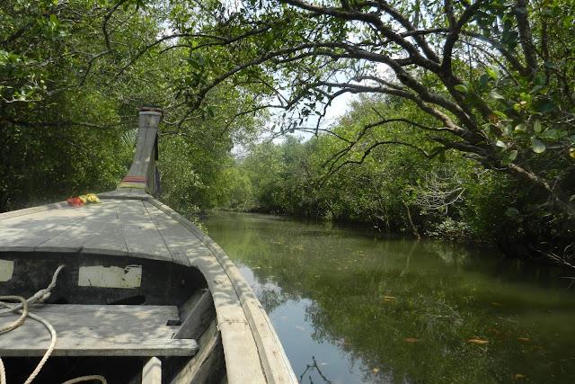 Las mangrowy w Krabi