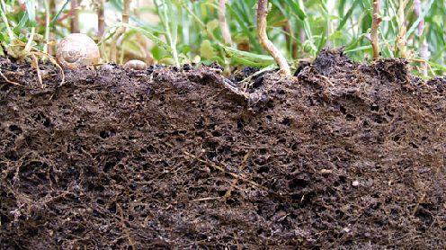 Lugar verde materia org nica en los suelos indispensable for Suelo organico para dibujar