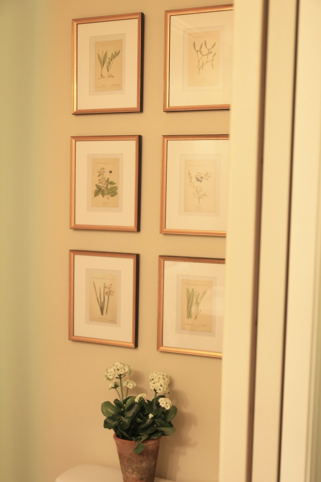 I Recently Found A New Spot To Display Botanical Collection In Our Powder Room These Are 8x10 Frames With 5x7 Prints They Were The Perfect Addition