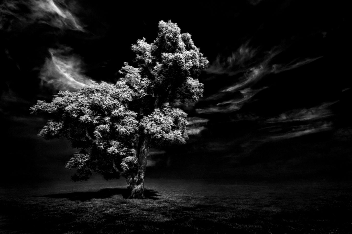 Wallpaper Hd 1080p Black And White Forest Link Wallpapers