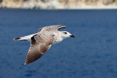 Dünyanın En Tehlikeli 5 Kuş Türü