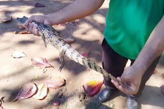 http://vnoticia.com.br/noticia/2949-filhote-de-jacare-resgatado-pelo-meio-ambiente-em-sao-francisco-de-itabapoana