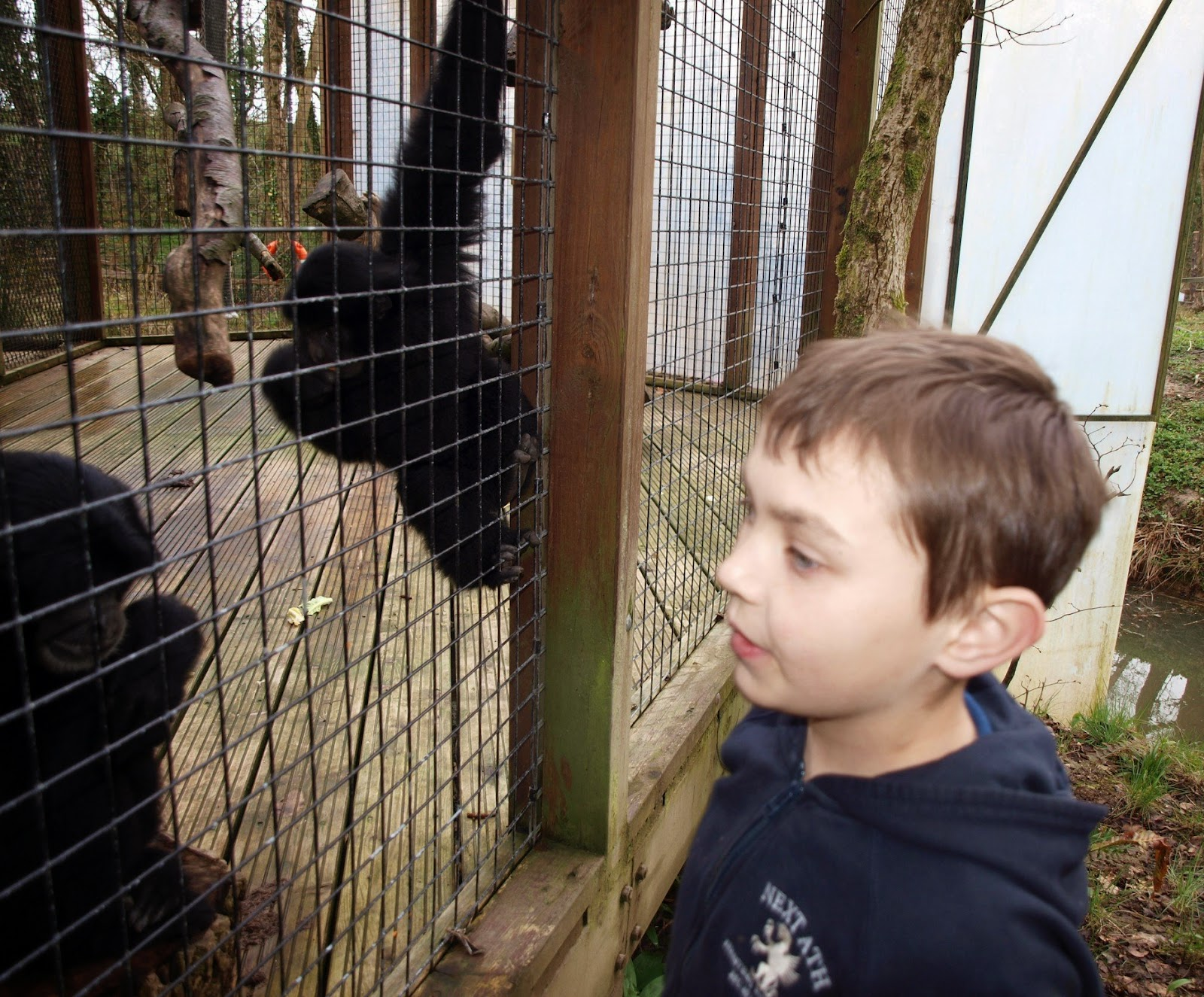 , Meeting the Funky Gibbons at Manor House Wildlife Park #CountryKids
