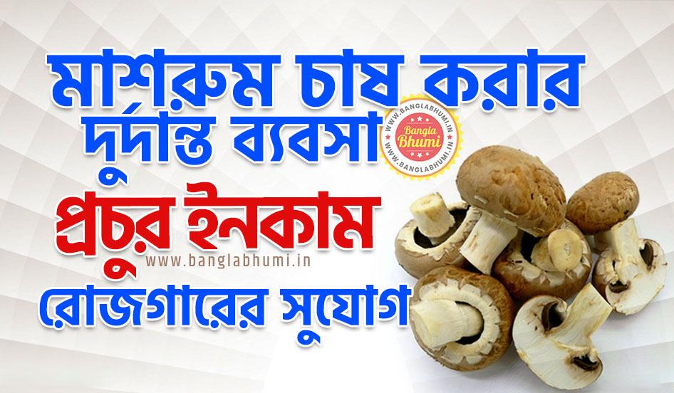 Mushroom Farming Business West Bengal