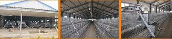 Sales Of Battery Cage System In Nigeria