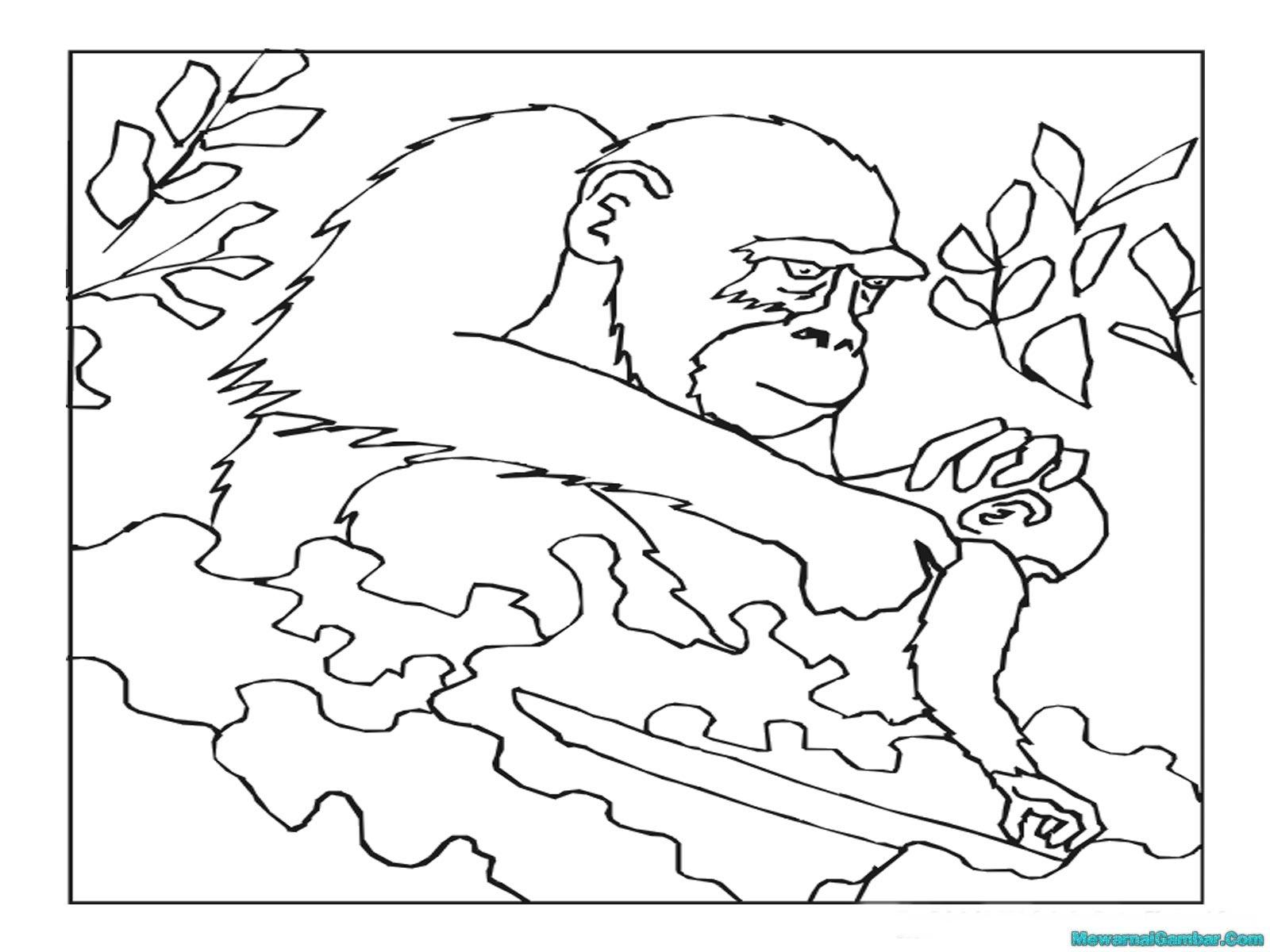 Mewarnai Gambar Gorila Sedang Memakan Buah Pisang Mewarnai Gambar Gorila Sedang Mencari Kutu Ditubuh Anaknya Yang Masih Kecil