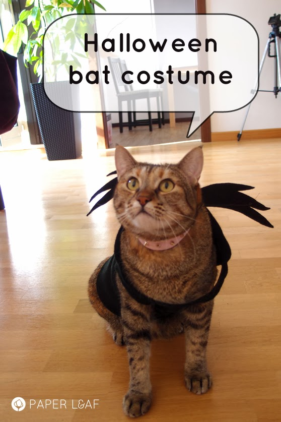 Kitten Halloween Costumes, Cute Cat Costumes, Amazing Halloween Costumes, Animal Costumes, Dog Costumes, Pet Costumes For Cats, Halloween Cat, Cat Costume For Dog, Thor Halloween Costume Find this Pin and more on DIY Craft Projects by Susan Bewley.