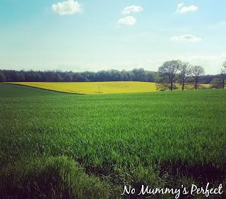 champs de colza herbe ciel bleu