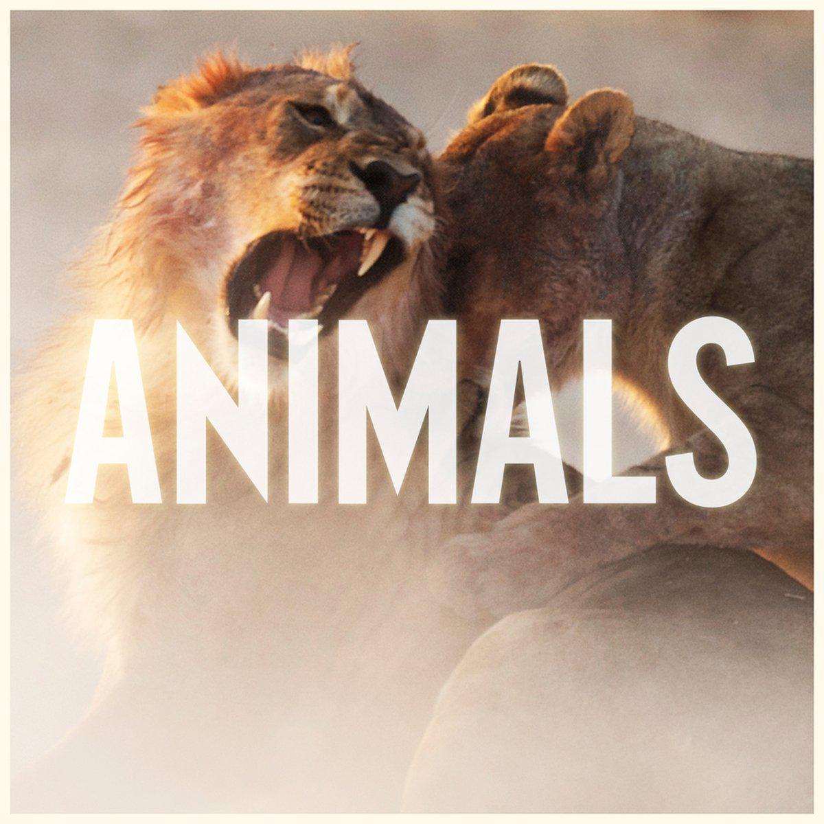เพลง maroon 5 animals