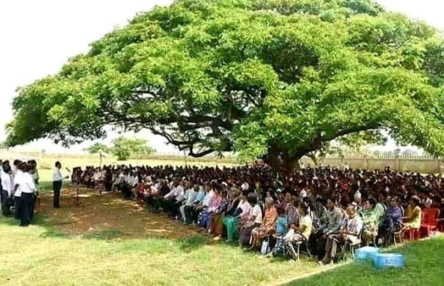 Big tree big benefit