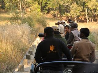 Tourist Bandhavgarh