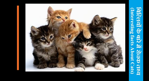 interesting-Cats-facts-in-hindi