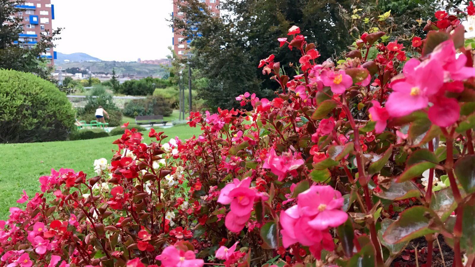 Barakaldo digital agenda de agosto el jard n bot nico for Jardin botanico tarifas