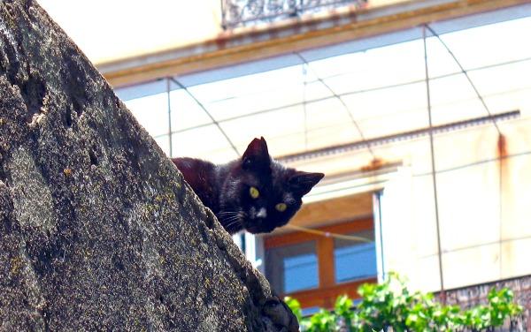 le cannet black cat