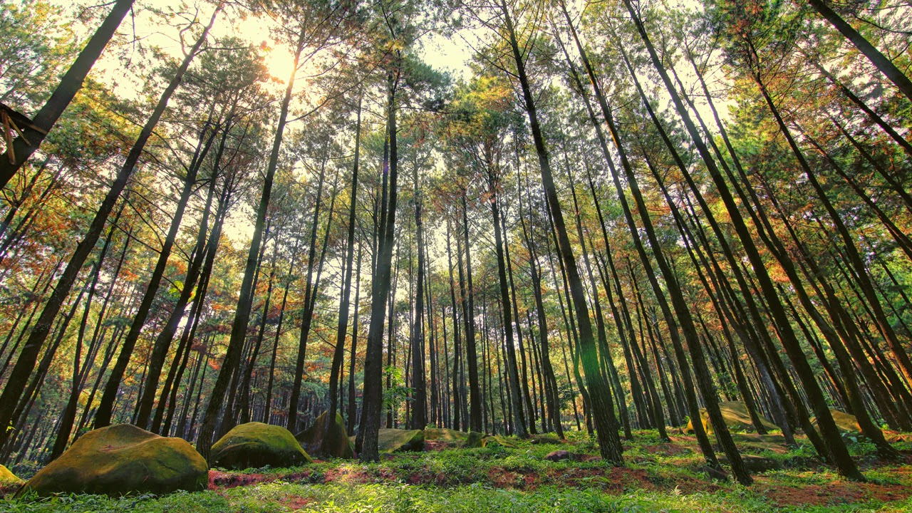 Image result for hutan bagus