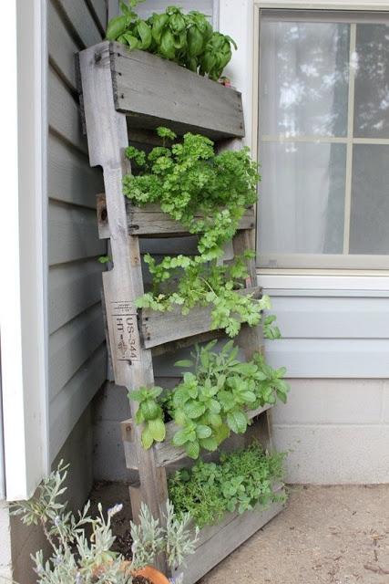 drewniane palety, ogródek, domowy ogródek, ogród, herb, garden zioła