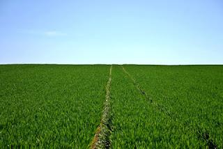 Έπαιρνε παράνομα επιδοτήσεις για αγροτεμάχια με πλαστά συμφωνητικά και υπογραφές