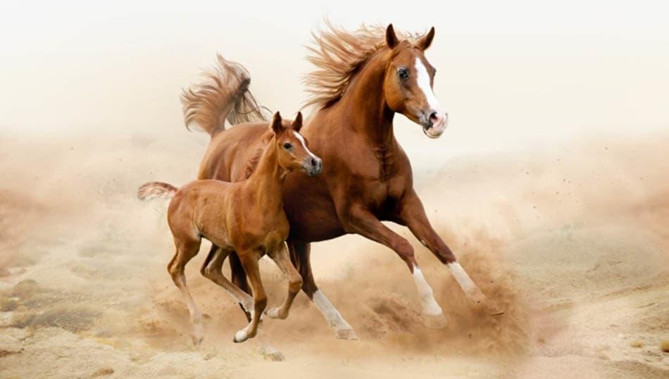 din, islamiyet, KTZ, Adiyat suresi, Baskın yapan atlara and olsun, Baskın yapan atlar, And içen Allah, Atlara yemin eden Allah, Bu nasıl Allah?, Allah,