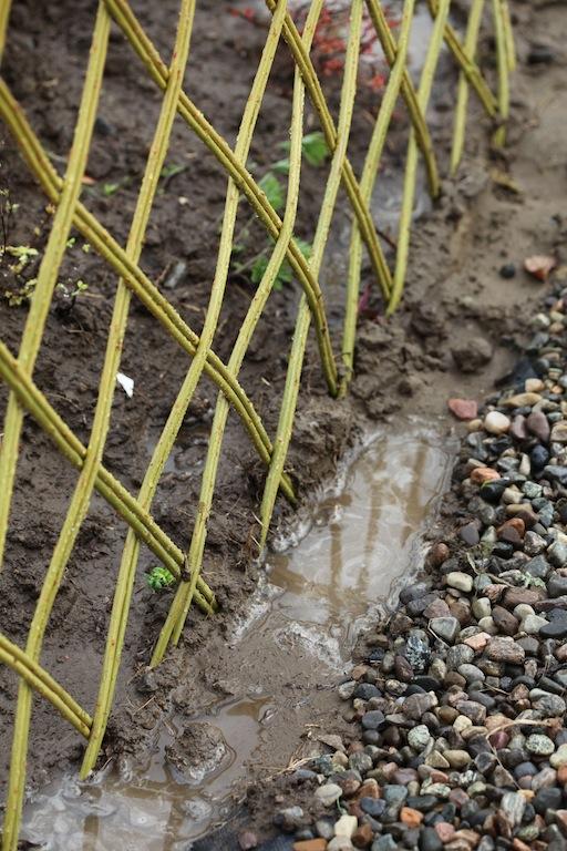 Planting av pil