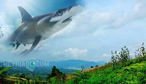 Cara Edit Foto Ada Ikan Hiu dan Paus di Langit