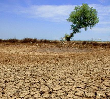 Image result for dampak pemanasan global warming
