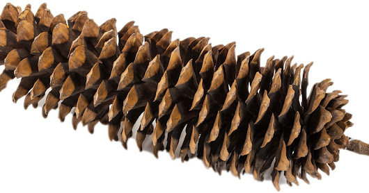 3 Ways to use Pinecones this November