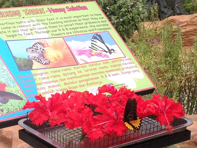 butterfly garden zoo negara