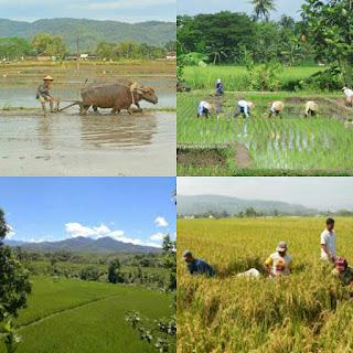 Inilah Hasil Tandurane Para Wali Ing Tanah Jawa