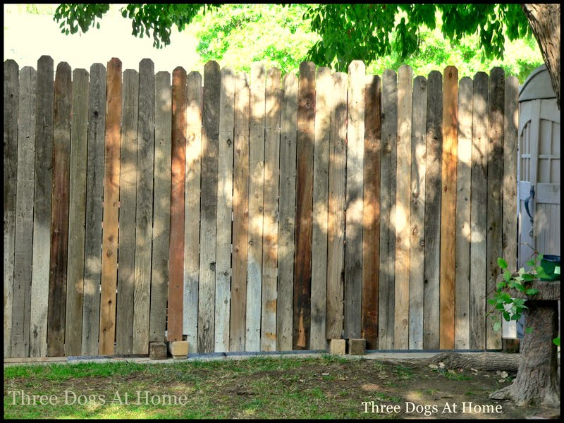 Traci Three Dogs At Home Is Taking Over My Blog Fence