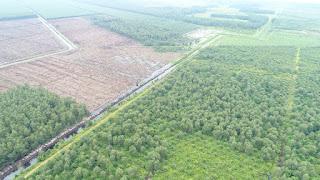 132 Perusahaan Perkebunan Diduga Merambah Hutan, Salah Satunya PT Petaling Mandraguna