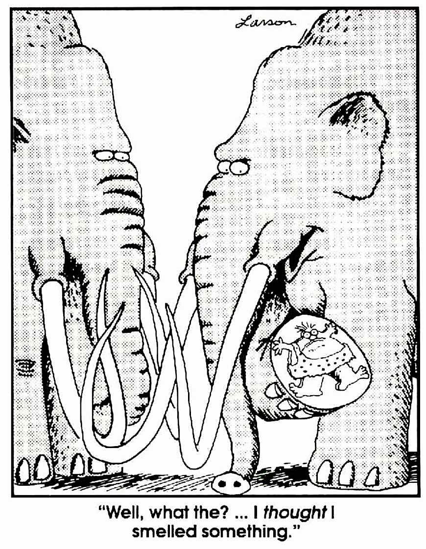 a Gary Larson cartoon about elephants